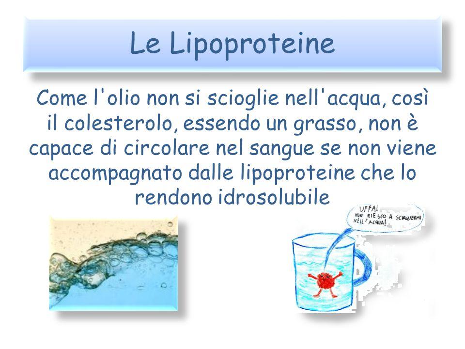 Le Lipoproteine
