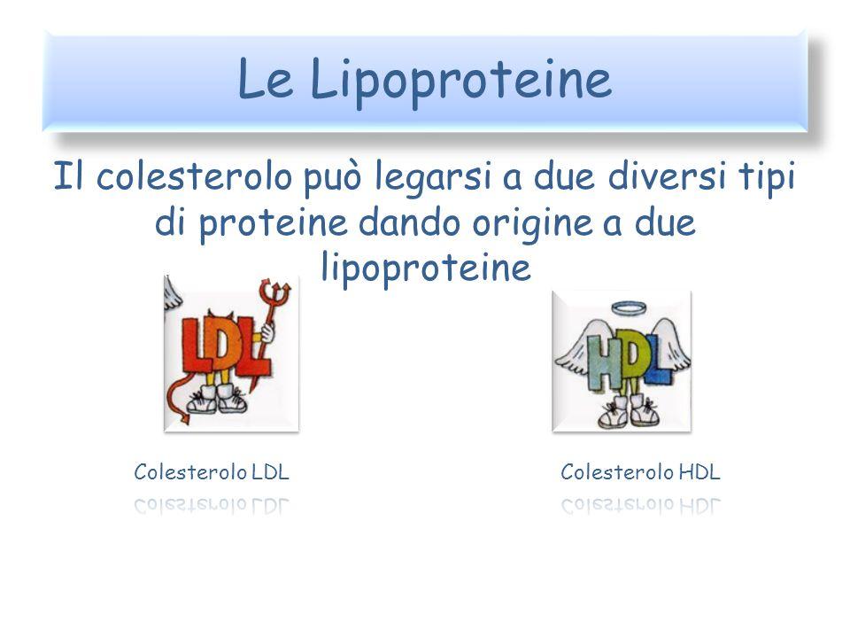 Le Lipoproteine Il colesterolo può legarsi a due diversi tipi di proteine dando origine a due lipoproteine.