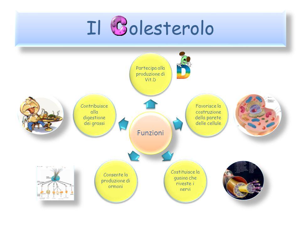 Il olesterolo Funzioni Partecipa alla produzione di Vit.D