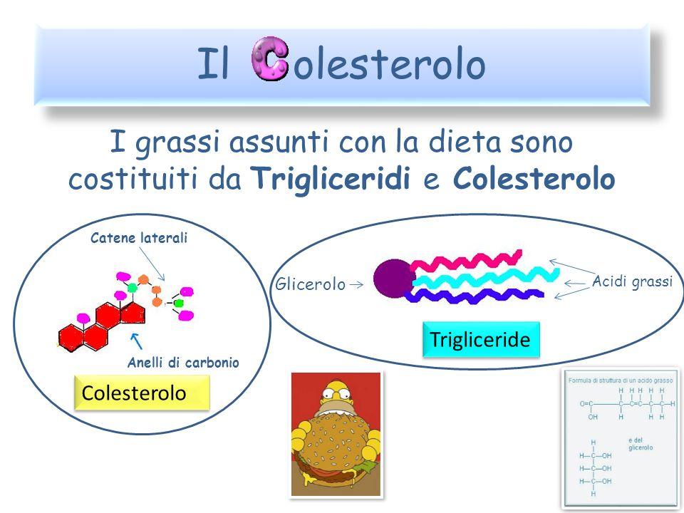 Il olesterolo I grassi assunti con la dieta sono costituiti da Trigliceridi e Colesterolo. Catene laterali.