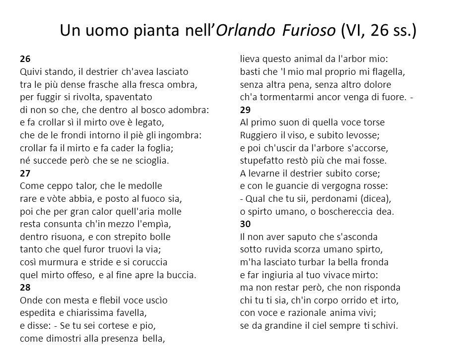 Un uomo pianta nell'Orlando Furioso (VI, 26 ss.)