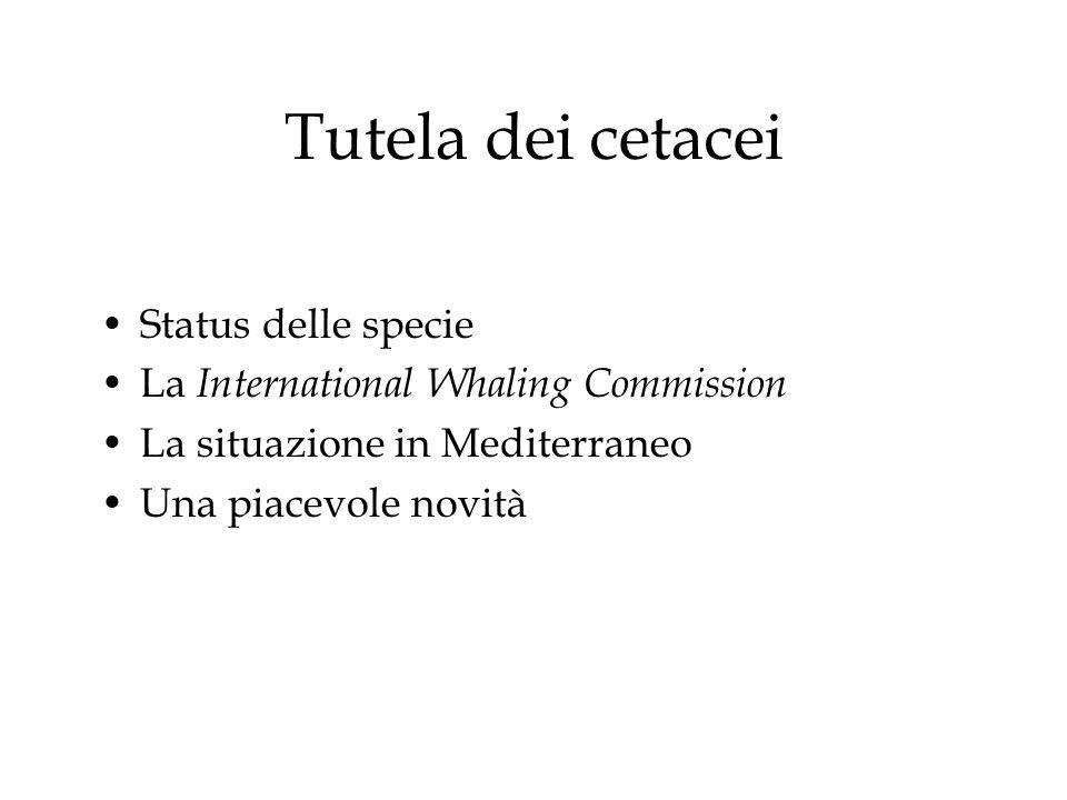 Tutela dei cetacei Status delle specie