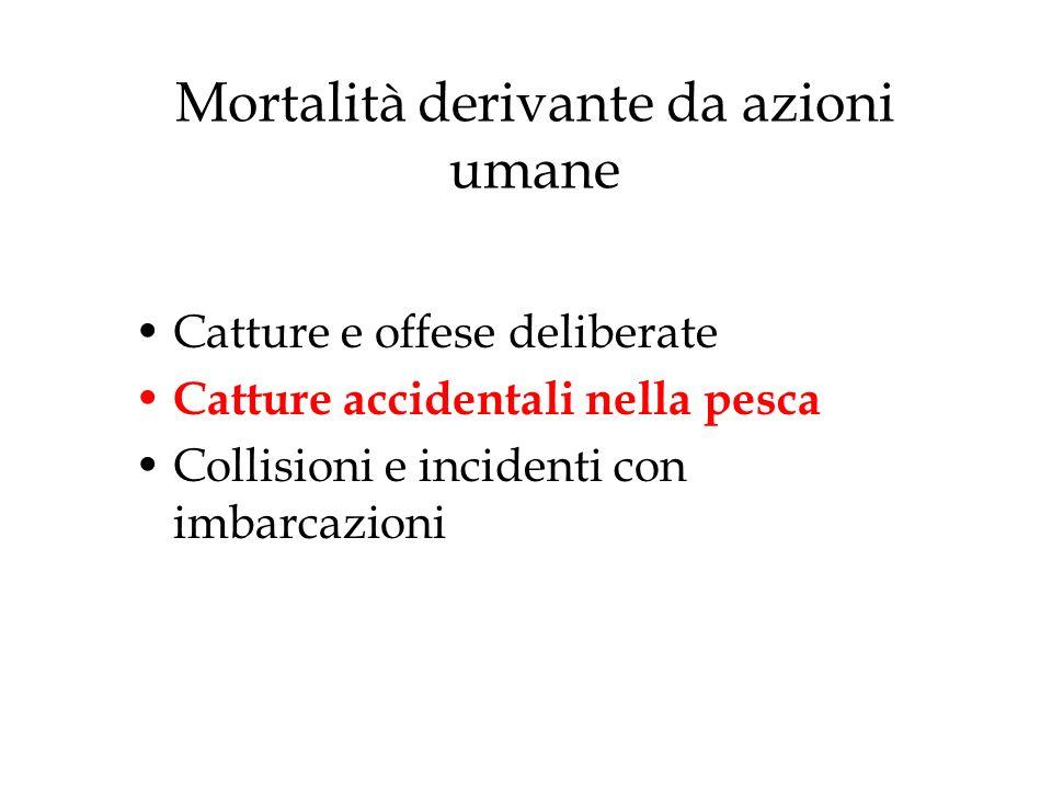 Mortalità derivante da azioni umane
