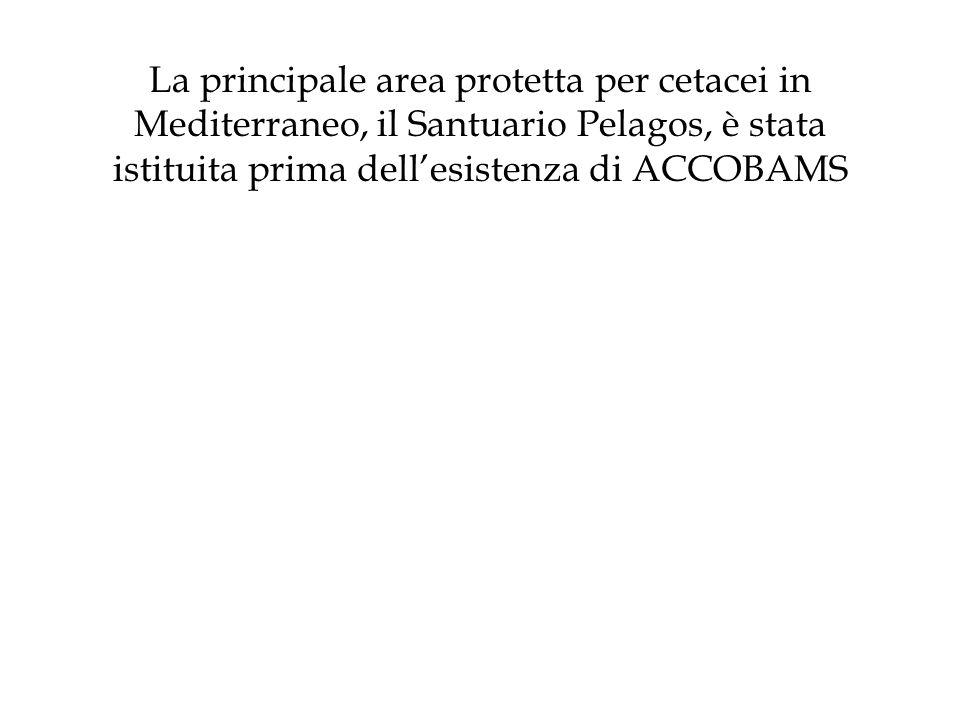 La principale area protetta per cetacei in Mediterraneo, il Santuario Pelagos, è stata istituita prima dell'esistenza di ACCOBAMS