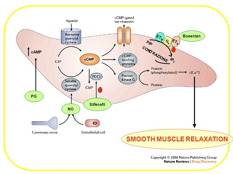 SMOOTH MUSCLE RELAXATION