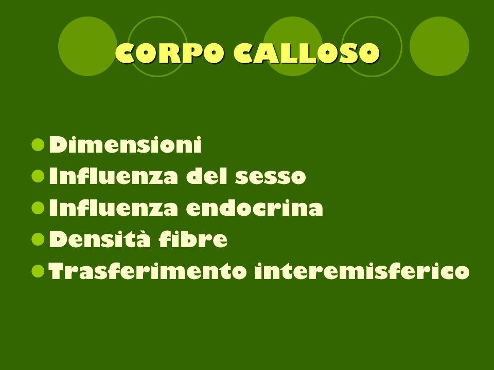 CORPO CALLOSO Dimensioni Influenza del sesso Influenza endocrina