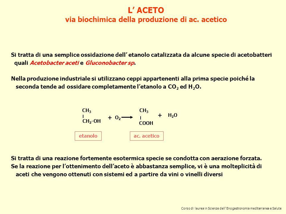 via biochimica della produzione di ac. acetico