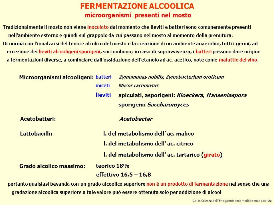 FERMENTAZIONE ALCOOLICA microorganismi presenti nel mosto