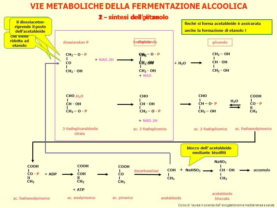 VIE METABOLICHE DELLA FERMENTAZIONE ALCOOLICA