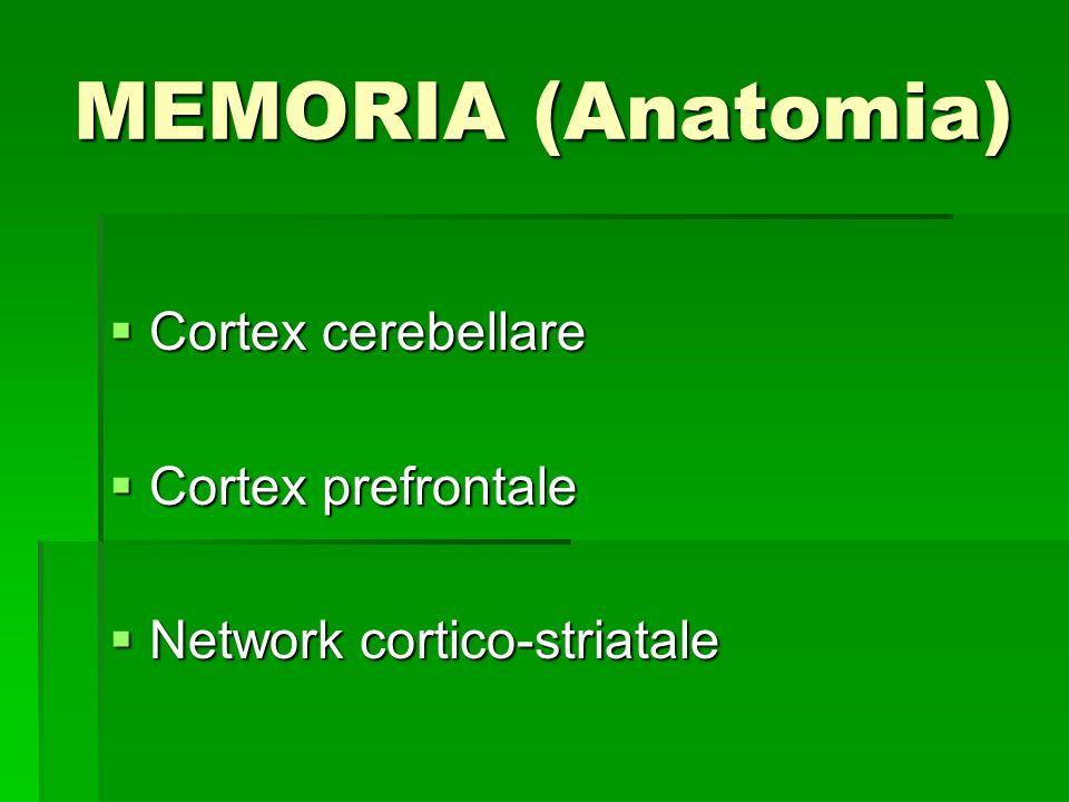 MEMORIA (Anatomia) Cortex cerebellare Cortex prefrontale