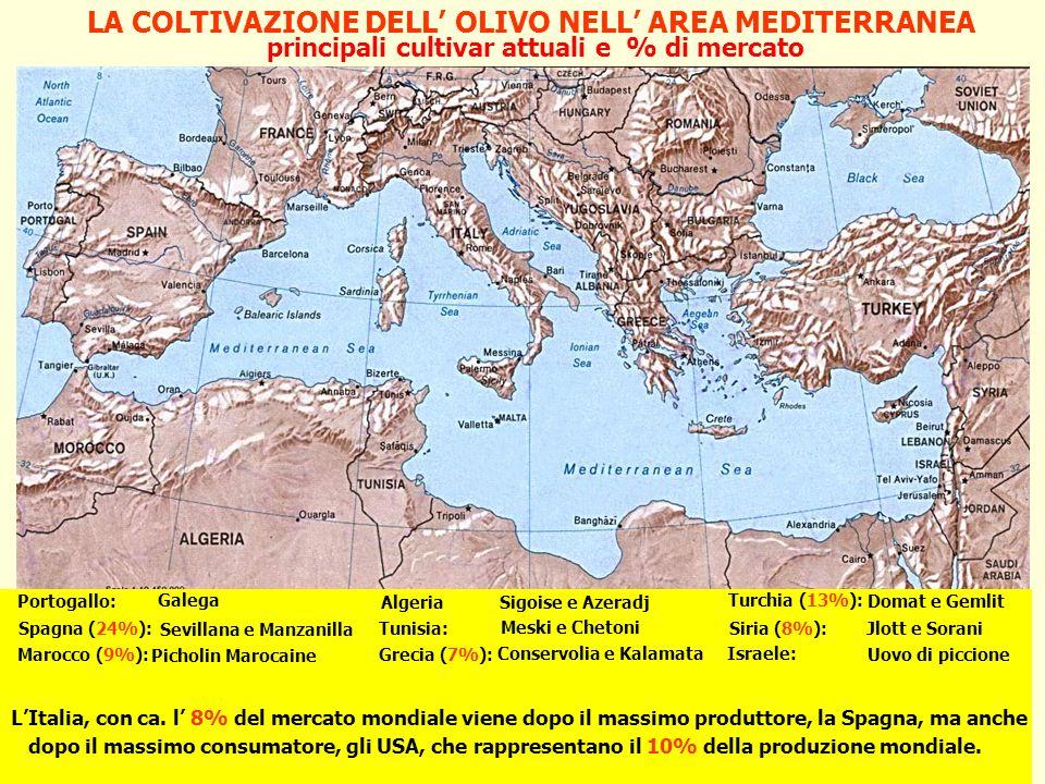 LA COLTIVAZIONE DELL' OLIVO NELL' AREA MEDITERRANEA