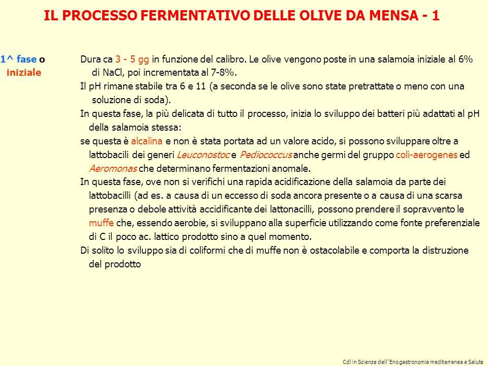 IL PROCESSO FERMENTATIVO DELLE OLIVE DA MENSA - 1