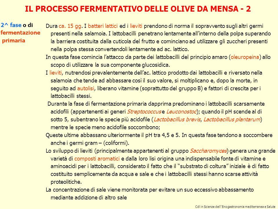 IL PROCESSO FERMENTATIVO DELLE OLIVE DA MENSA - 2