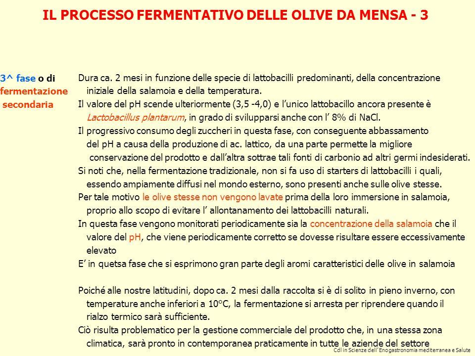IL PROCESSO FERMENTATIVO DELLE OLIVE DA MENSA - 3