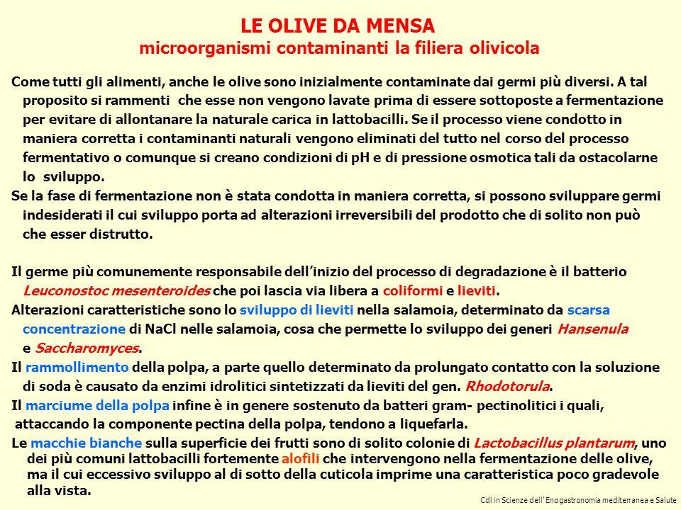 microorganismi contaminanti la filiera olivicola