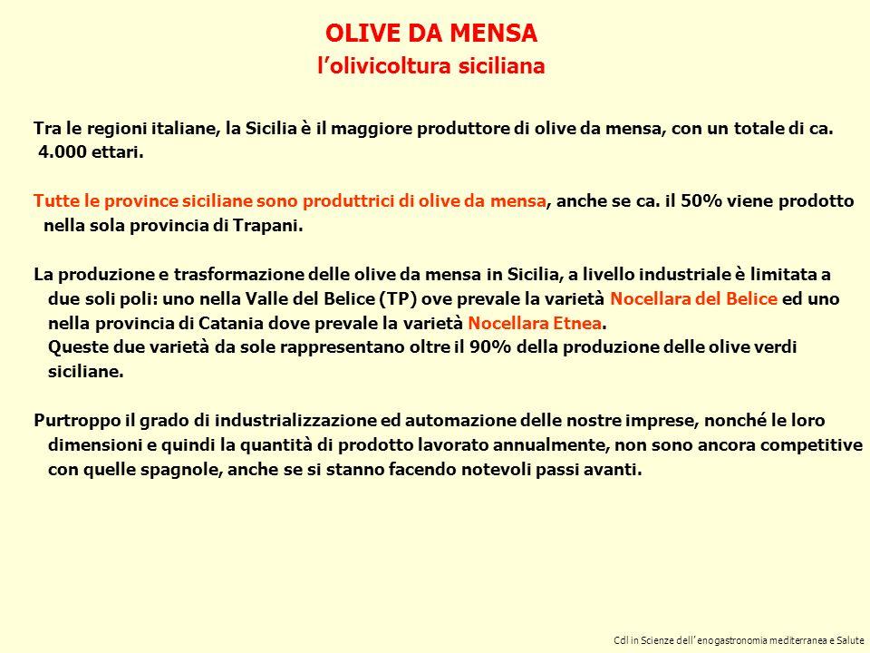 l'olivicoltura siciliana