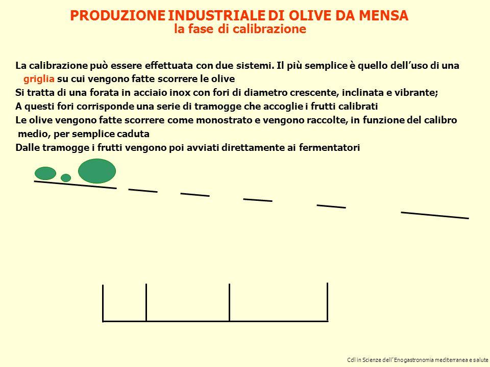 PRODUZIONE INDUSTRIALE DI OLIVE DA MENSA la fase di calibrazione