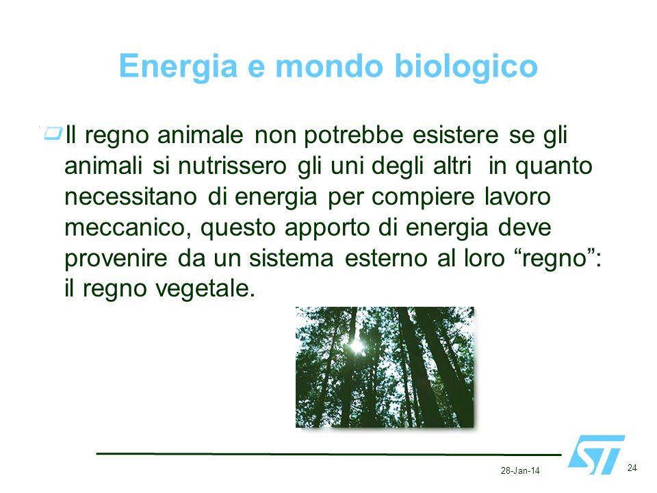 Energia e mondo biologico