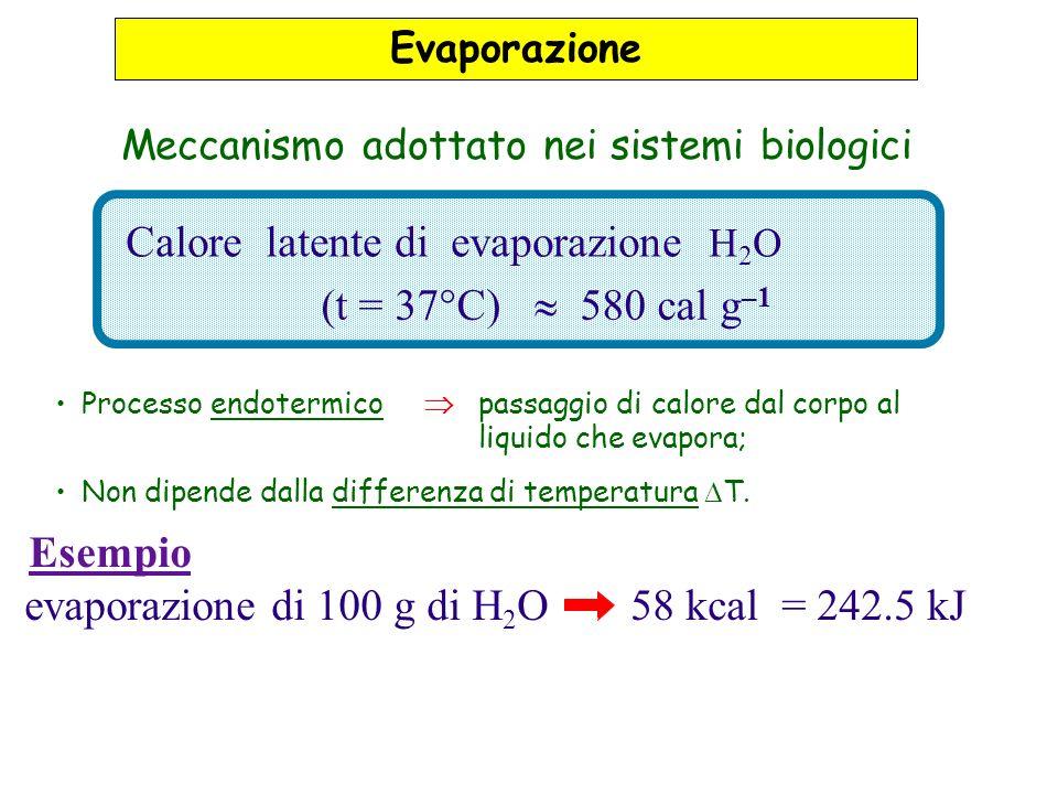 Meccanismo adottato nei sistemi biologici