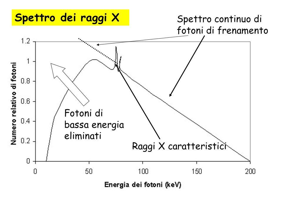 Spettro dei raggi X Spettro continuo di fotoni di frenamento Fotoni di