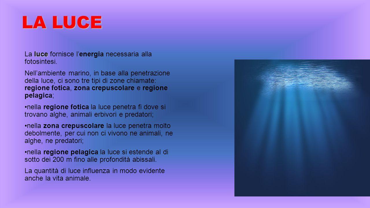 LA LUCE La luce fornisce l'energia necessaria alla fotosintesi.