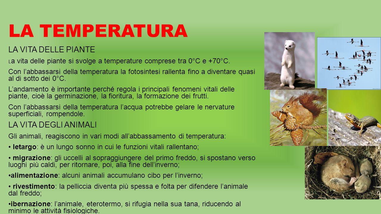 LA TEMPERATURA LA VITA DELLE PIANTE LA VITA DEGLI ANIMALI