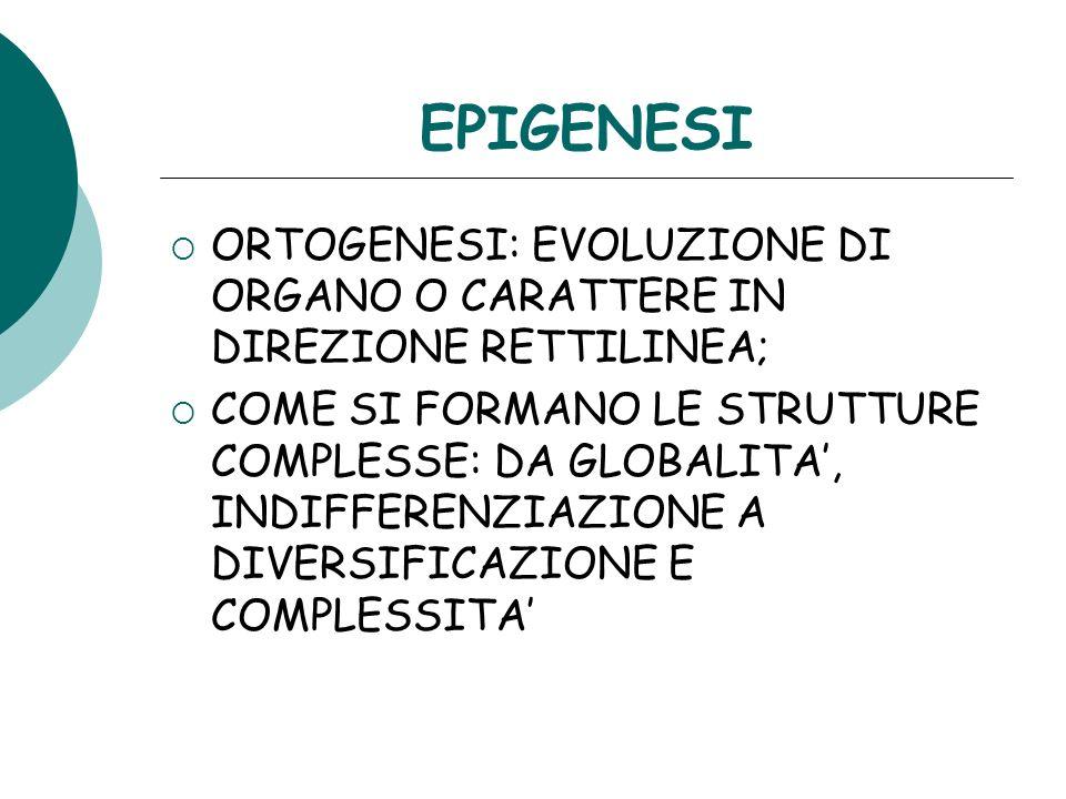 EPIGENESI ORTOGENESI: EVOLUZIONE DI ORGANO O CARATTERE IN DIREZIONE RETTILINEA;
