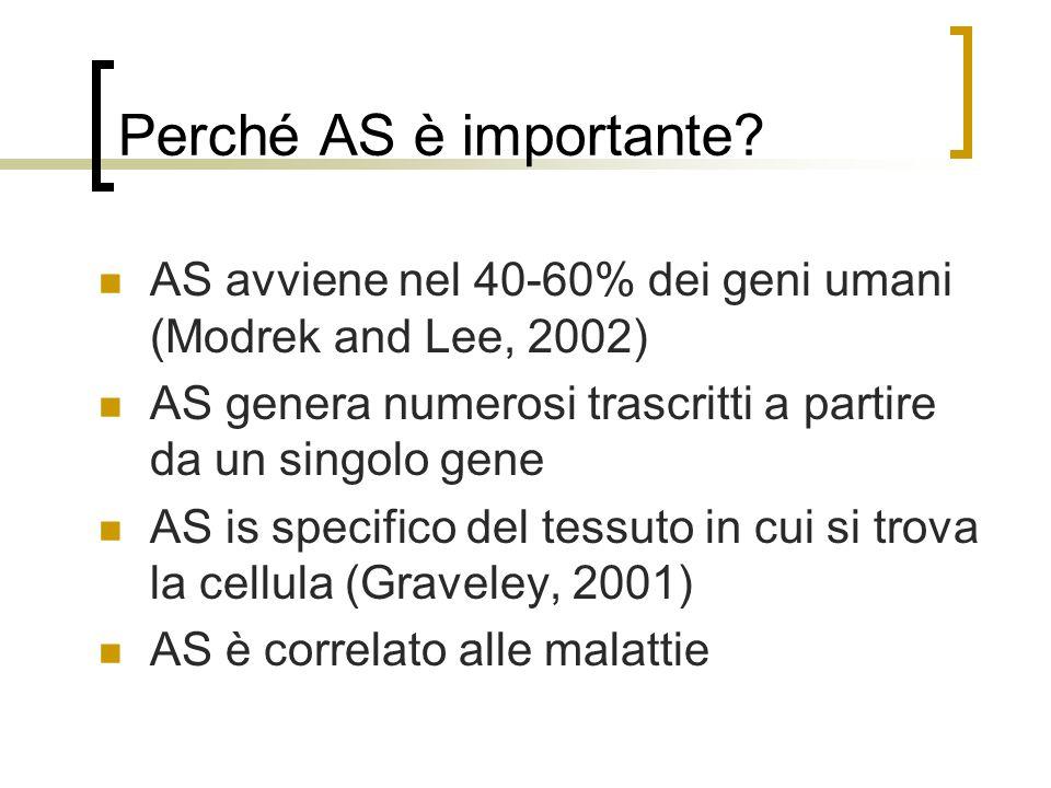 Perché AS è importante AS avviene nel 40-60% dei geni umani (Modrek and Lee, 2002) AS genera numerosi trascritti a partire da un singolo gene.