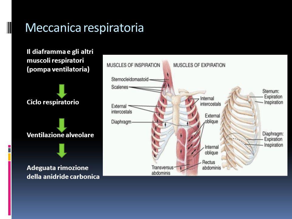 Meccanica respiratoria