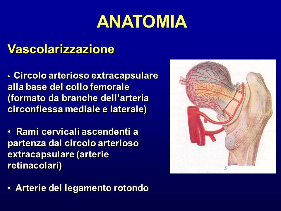 ANATOMIA Vascolarizzazione