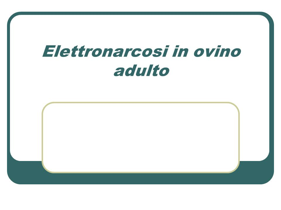 Elettronarcosi in ovino adulto