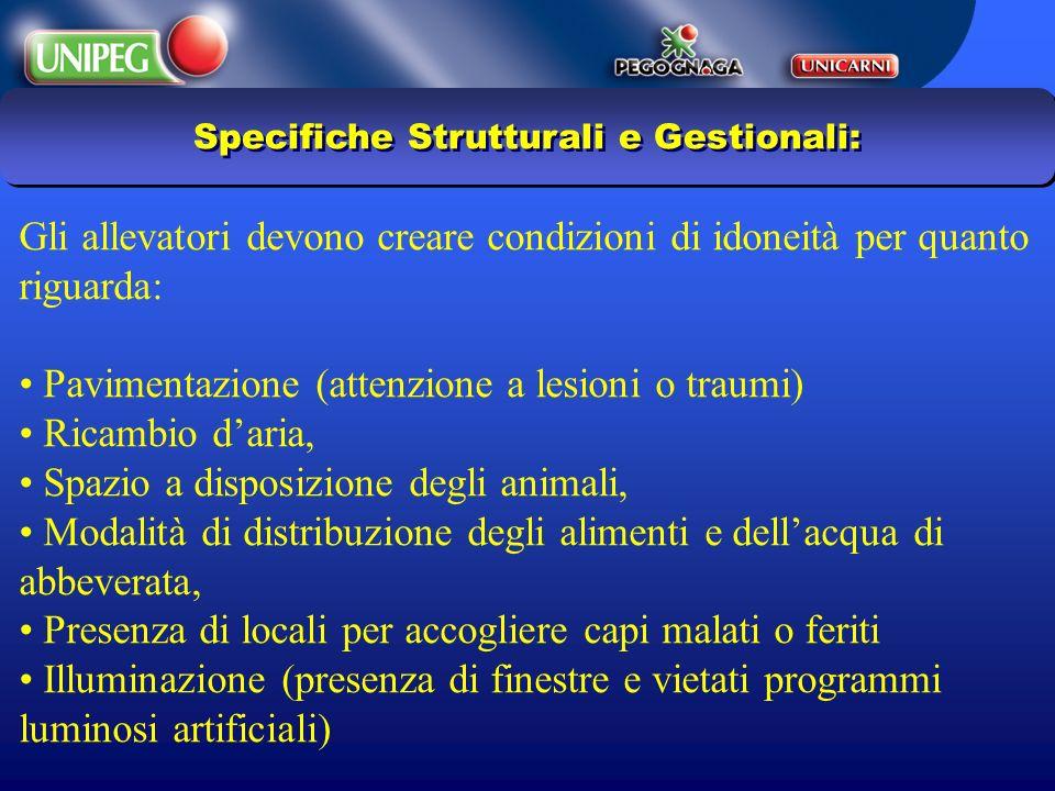 Specifiche Strutturali e Gestionali: