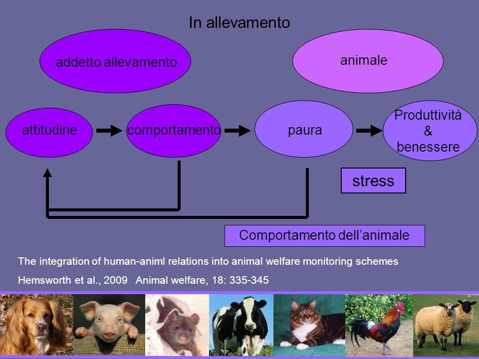 In allevamento stress addetto allevamento animale