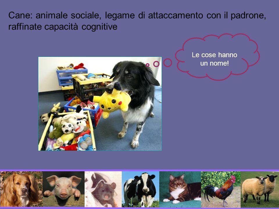 Cane: animale sociale, legame di attaccamento con il padrone, raffinate capacità cognitive