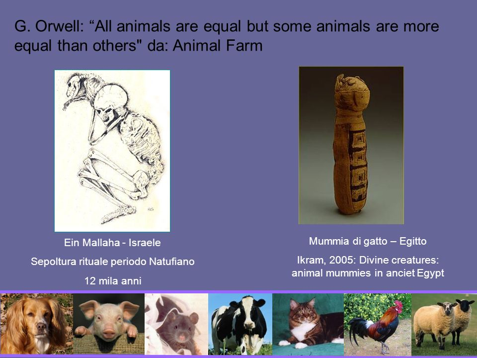 G. Orwell: All animals are equal but some animals are more equal than others da: Animal Farm