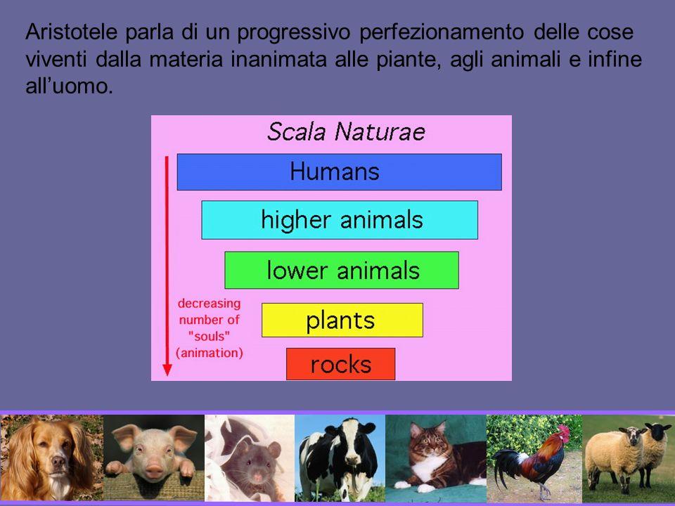 Aristotele parla di un progressivo perfezionamento delle cose viventi dalla materia inanimata alle piante, agli animali e infine all'uomo.