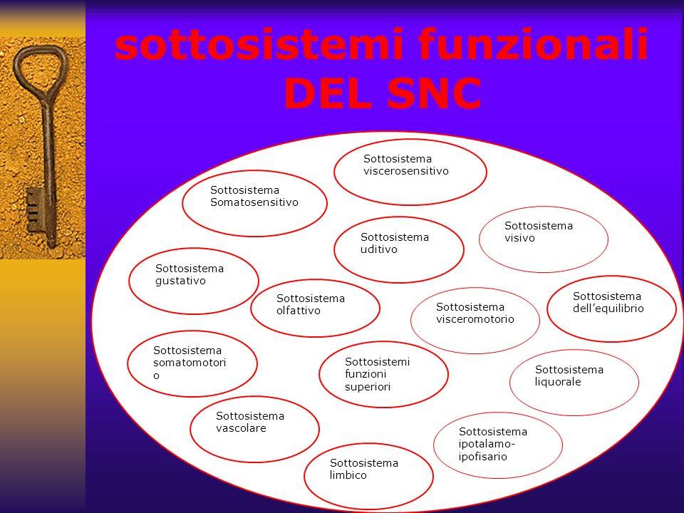 sottosistemi funzionali DEL SNC