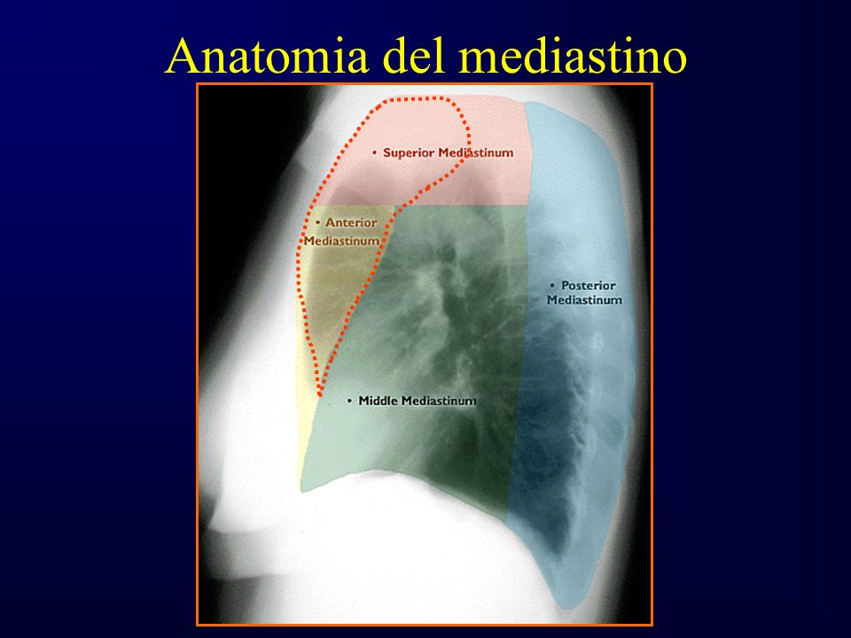 Anatomia del mediastino