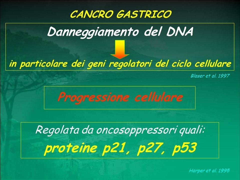 proteine p21, p27, p53 Danneggiamento del DNA Progressione cellulare