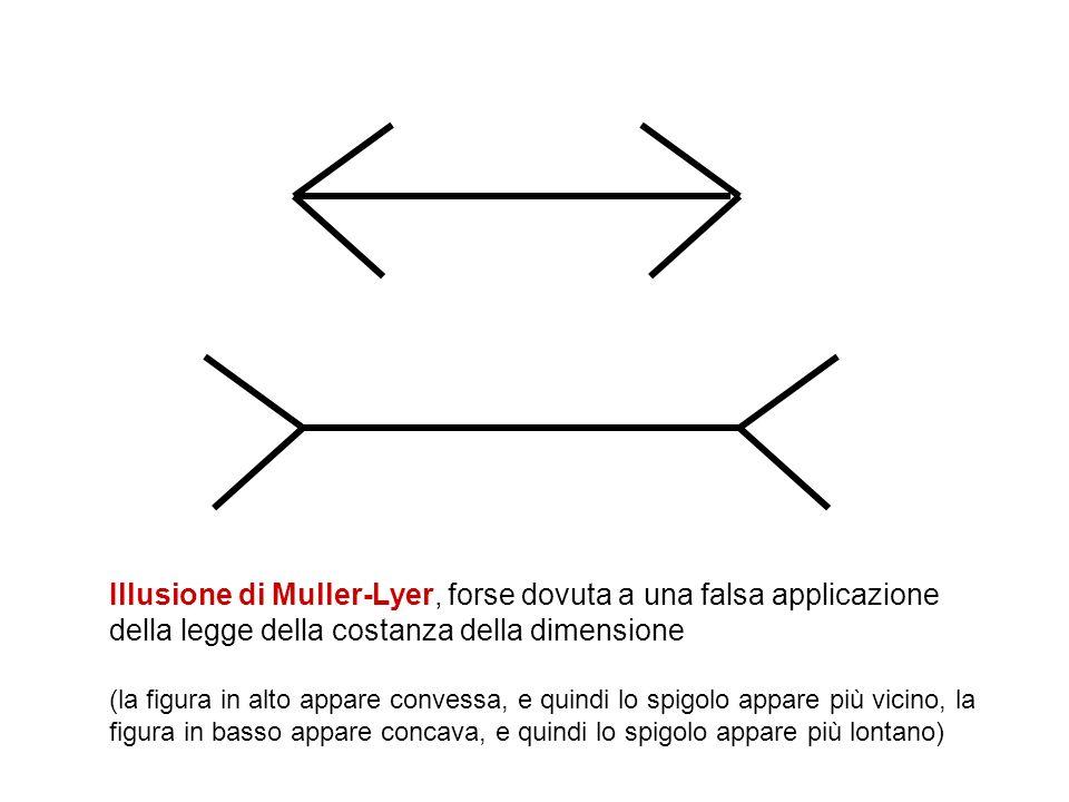 Illusione di Muller-Lyer, forse dovuta a una falsa applicazione della legge della costanza della dimensione (la figura in alto appare convessa, e quindi lo spigolo appare più vicino, la figura in basso appare concava, e quindi lo spigolo appare più lontano)