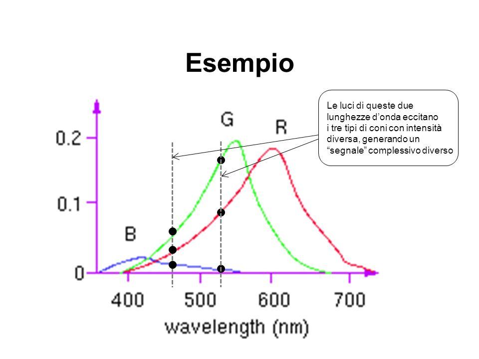 Esempio Le luci di queste due lunghezze d'onda eccitano i tre tipi di coni con intensità diversa, generando un segnale complessivo diverso.