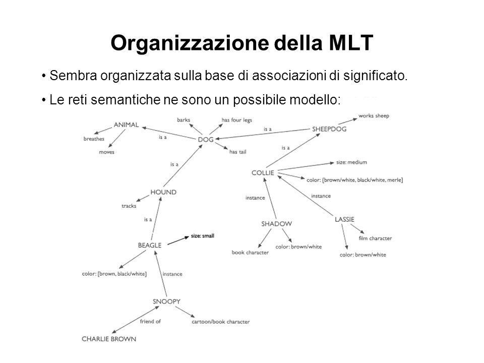 Organizzazione della MLT