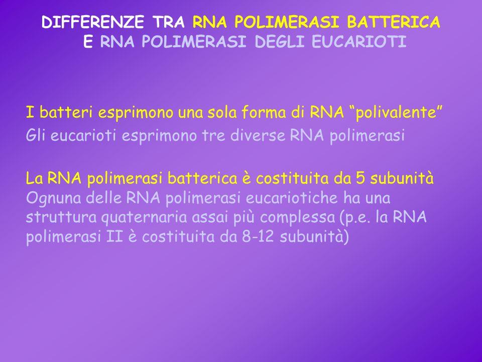 DIFFERENZE TRA RNA POLIMERASI BATTERICA