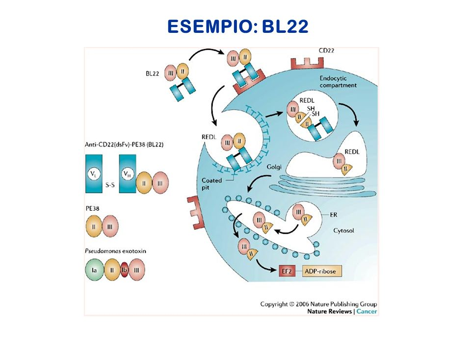 ESEMPIO: BL22 Pastan et al. Nature Reviews Cancer 6, 559–565 (July 2006) | doi:10.1038/nrc1891