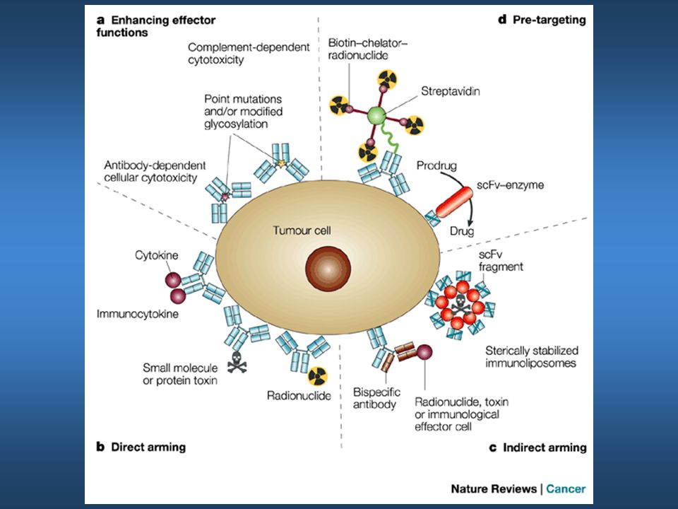Strategies for enhancing the potency of antitumour antibodies