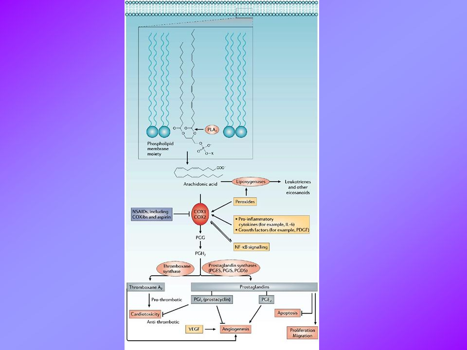 NSAIDs, COX inhibition and prostaglandins