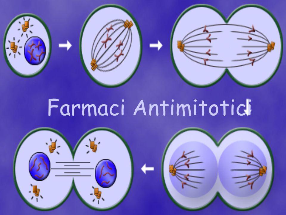 Farmaci Antimitotici