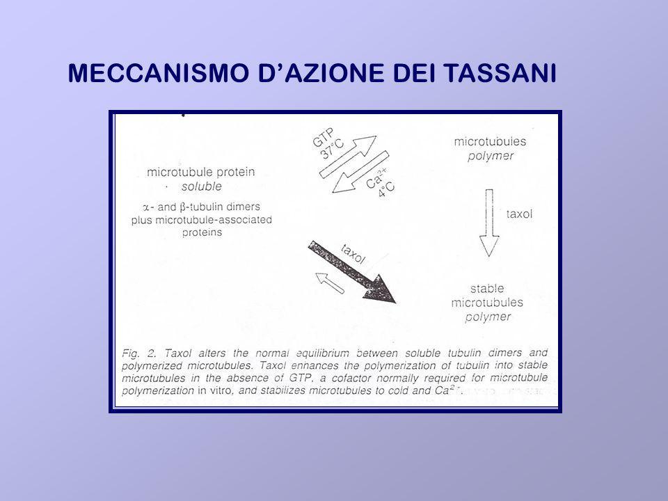 MECCANISMO D'AZIONE DEI TASSANI