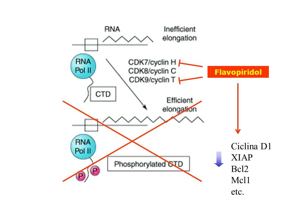 Ciclina D1 XIAP Bcl2 Mcl1 etc. Flavopiridol