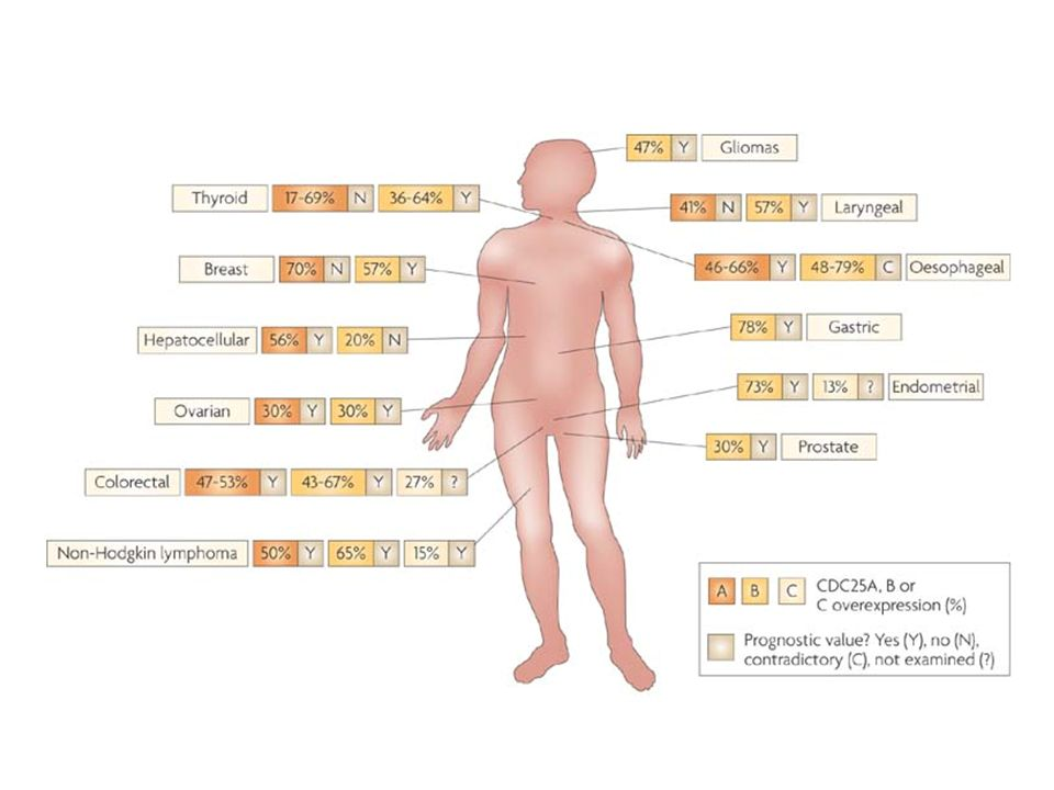 Cell division cycle 25 (CDC25) proteins reported to be overexpressed in primary tumour samples from patients with breast96, prostate84, ovarian163, endometrial104, colorectal88, 89, oesophageal91, 92, 94, 112, thyroid96, 97, 98, laryngeal99, gastric101 and hepatocellular cancers100, glioma107, neuroblastoma106 or non-Hodgkin lymphoma109.
